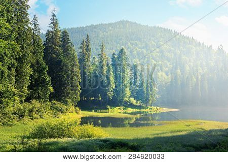 Amazing Landscape With Mountain Lake Among Forest. Beautiful Summer Scenery In The Morning. Conifero