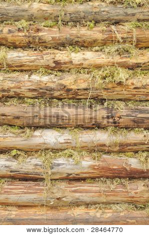 Wall Of Wood Logs Chinked With Moss