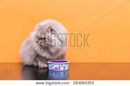 Portrait Of A Fluffy Cat That Eats Pet Food On A Orange Background. Plate With Food And A Gray Adult