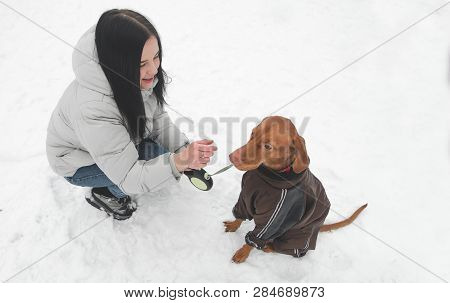 Owner And A Cute Brown Dog In The Clothes Sit In The Snow And Play. Winter Walks And Dog Games In Th
