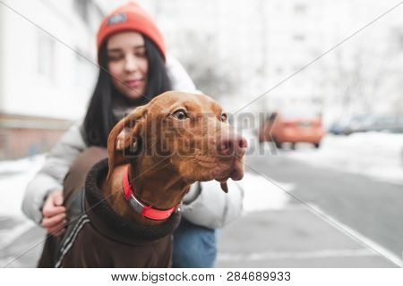 Portrait Of A Cute Brown Dog On The Street Looking At The Background Of A Young Woman Holding Him. C