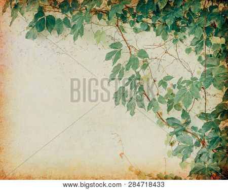 ivy on old grunge antique paper texture
