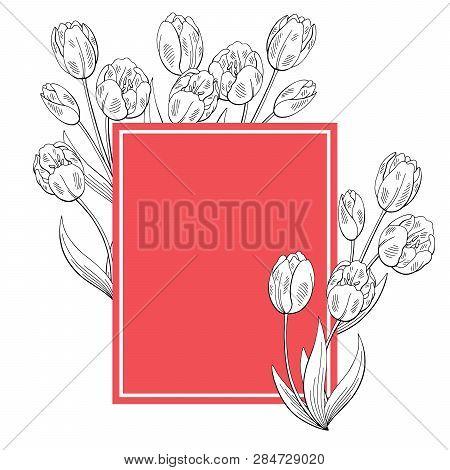 Tulip Flower Graphic Color Background Bouquet Sketch Illustration Vector