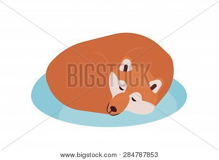 Akita Inu. Lovely Purebred Japanese Companion Dog Sleeping Or Taking Nap Isolated On White Backgroun
