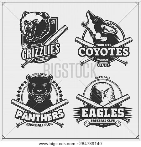 Set Of Baseball Badges, Labels And Design Elements. Sport Club Emblems With Grizzly Bear, Panther, C