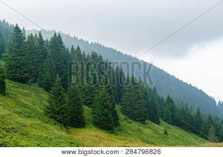 Landscape With Hills Covered With Coniferous Forests