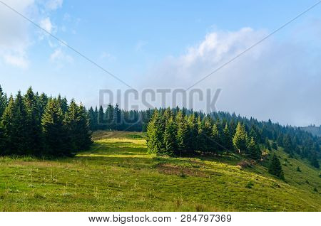 Meadow On A Hill Covered With Coniferous Trees
