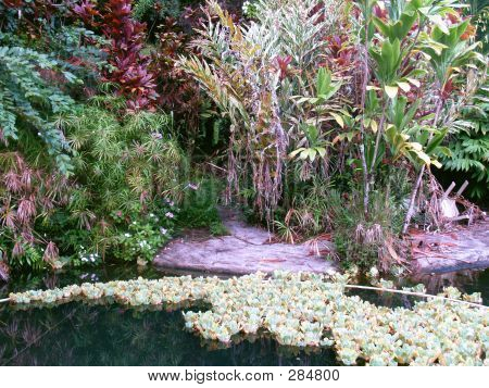 Koi Pond At The Jungle