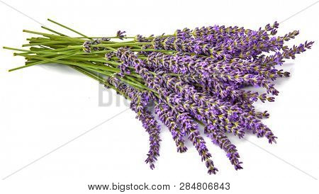 Bunch flower lavender therapeutic herbs, isolated on white background. poster