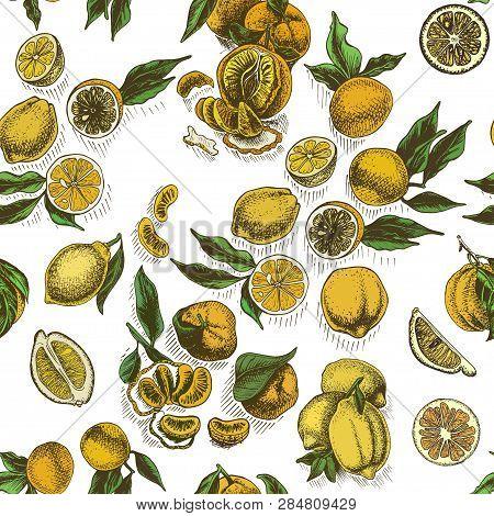 Vector Sketch Background Fruit. Citrus - Bergamot, Lemon, Orange, Lime, Tangerine, Tangelo, Grapefru