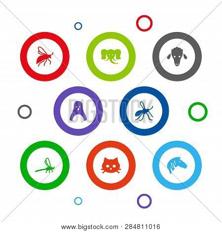 Set Of 8 Zoology Icons Set. Collection Of Mosquito, Zebra, Wisp And Other Elements.