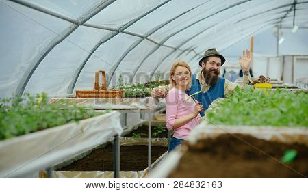 Family Garden. Family Garden Business. Happy Family Work In Garden. Family Greenhouse Garden. Plants