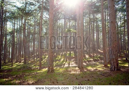 Photo of green trees and blue sky in forest.