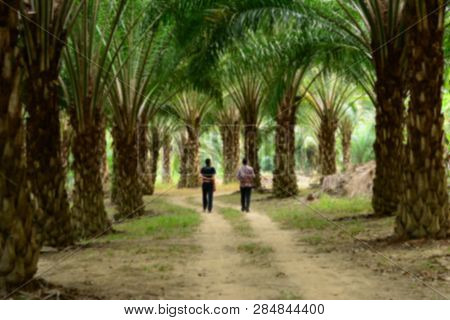 The Blure Of Two Man Walking At Palm Garden In Farmland