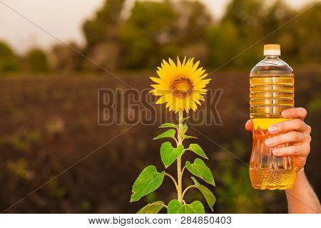 Man's hand hold bottle of sunflower oil. Sunflower oil improves skin health and promote cell regeneration poster