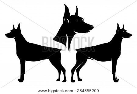 Standing Side View Doberman Pinscher And Dog Profile Head - Black And White Vector Design Set