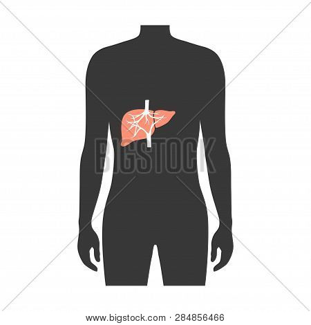 Vector Isolated Illustration Of Liver Anatomy. Human Digestive System Icon. Healthcare Medical Cente