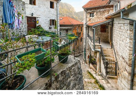 Kotor, Montenegro - September 15 2018: A Tabby Stray Cat Sits In A Garden Planter On An Exterior Pat