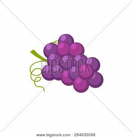Grapes Cartoon Vector Clipart. Winery. Fresh Juicy Fruits, Berries. Autumn, Summer Harvest Isolated