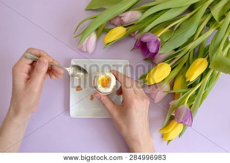 Hands Over Boiled Egg And Spring Tulips