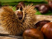 Chestnuts and chestnut bur on wooden table and black background with copy space. poster
