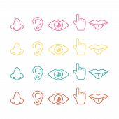 five senses icon. Sight, smell, hearing, touch, taste icons vector poster