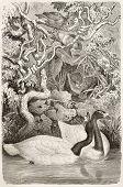 Black-necked Swan old illustration (Cygnus melancoryphus). Created by Kretschmer and Illner, published on Merveilles de la Nature, Bailliere et fils, Paris, ca. 1878 poster