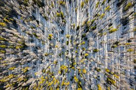 Aerial view from above shooting straight down into trees along a mountainside in the Gore Range area of Summit County near Silverthorne, Colorado.