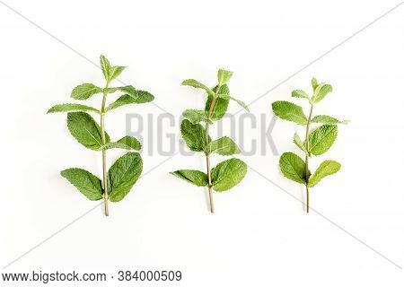 Green Branch And Leaf Mint Isolated On White Background. Set Of Peppermint. Mint Pattern. Flat Lay.