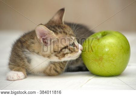Striped With A White Kitten And A  Apple