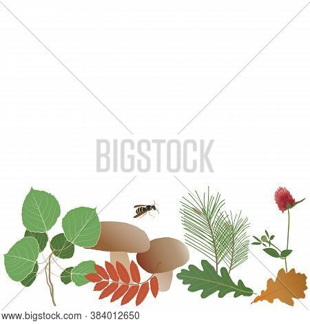 Autumn Forest Composition, Mushrooms, Aspen And Pine Branches, Clover, Oak And Rowan Leaves, Flying