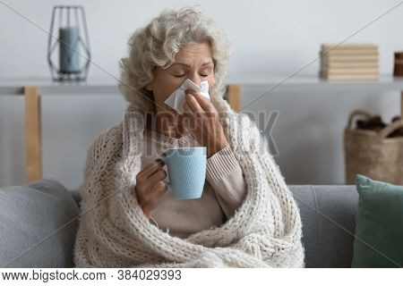 Sick Mature Woman Wrapped Blanket Blowing Running Nose, Feeling Unhealthy