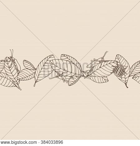 Horizontal Seamless Pattern Of Decorative Leaves & Pest Insects, Grasshopper, Locust, Colorado Beetl
