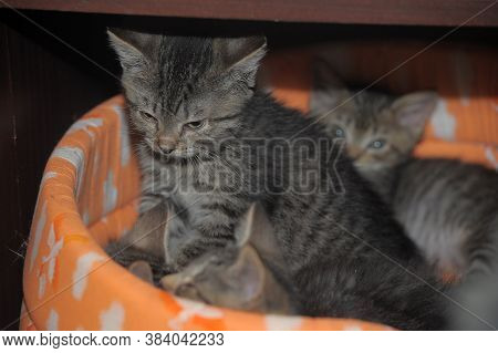 Little Cute Brown Kittens Together Close Up