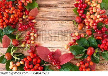 Colorful Autumn Composition With Rowan Berries, Viburnum And Rose Hips.