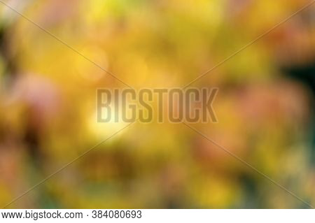 Backdrop For Autumn Mood. Yellow Festival Bokeh. Yellow Autumn Foliage. Branch With Yellow Leaves. B