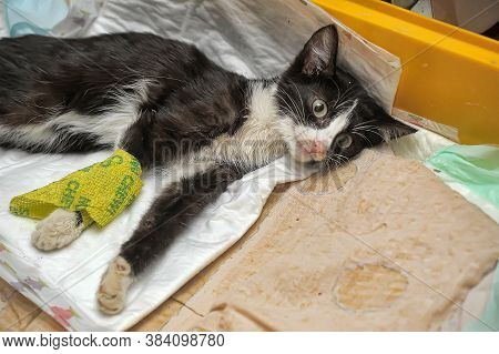Sick Kitten Lies With A Catheter In Its Paw