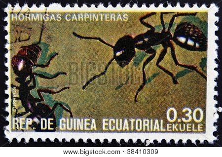 EQUATORIAL GUINEA - CIRCA 1973: stamp printed in Guinea dedicated to insects shows carpenter ants ci