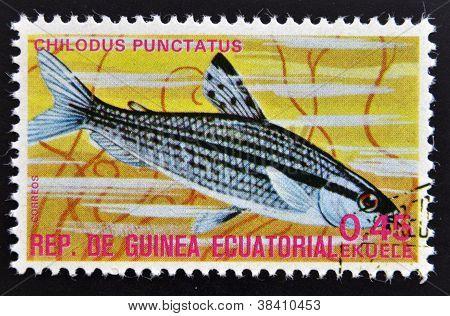 EQUATORIAL GUINEA - CIRCA 1974: A stamp printed in Guinea Ecuatorial dedicated to exotic fish shows