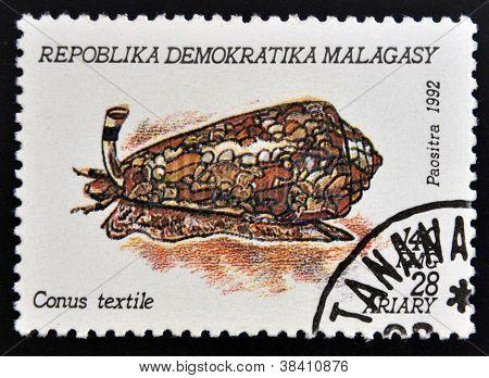 MADAGASCAR - CIRCA 1992: A stamp printed in Madagacar shows conus textile circa 1992