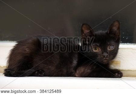 Kitten With An Eyesore, A Leukoma Or An Eyesore, Is A Clouding Of The Cornea With The Formation Of A