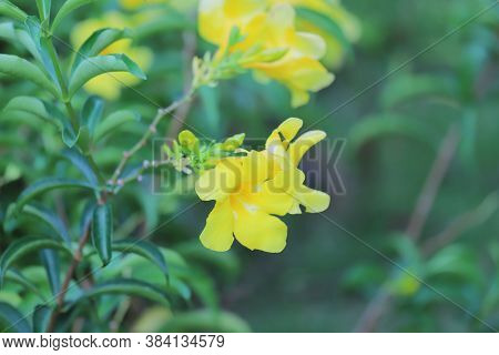 The Yellow Flower At The Nature Of Fall Season