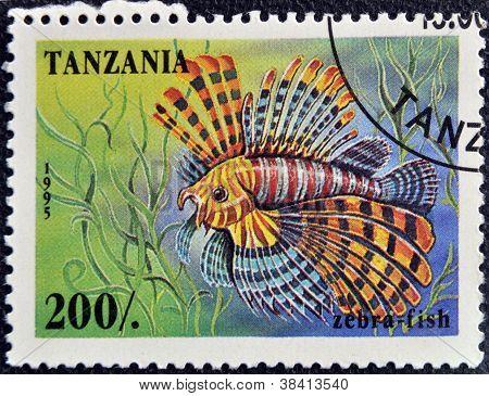 TANZANIA - CIRCA 1995: A stamp printed in Tanzania showing Zebrafish circa 1995