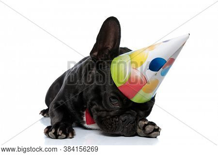 Adorable French Bulldog puppy wearing bowtie and party hat, laying down and begging on white studio background
