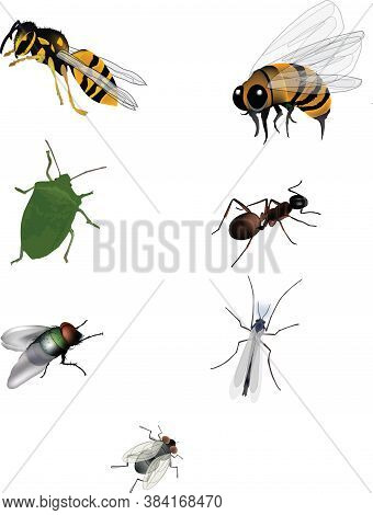 Local Insects Ant Bee, Wasp Bedbug Fly Local Insects Ant Bee, Wasp Bedbug Fly