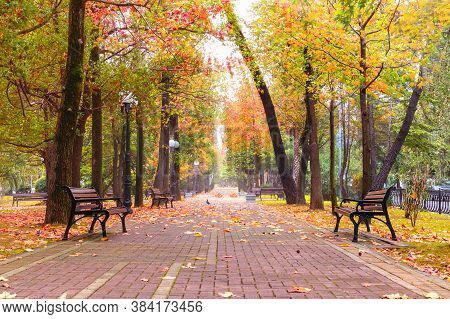 Autumn Park Alley Walk Road And Wooden Benches Under Colorful Leaves In City Landscape. The Way In P