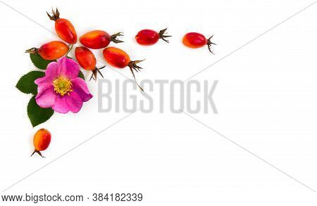 Fresh Red Fruits And Pink Flower Dog Rose, Briar (rosa Rubiginosa, Rose Hips) With Leaves On A White