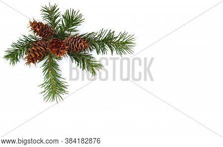 Cones And Twigs Pine Tree (pseudotsuga Menziesii, Douglas Fir, Douglas-fir, Douglas Tree, Oregon Pin