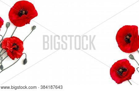Frame Of Flowers Red Poppies (papaver Rhoeas, Common Names: Corn Poppy, Corn Rose, Field Poppy, Red