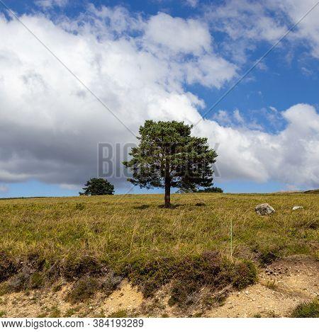 Árvore Isolada Em Vale De Poldros, Melgaço